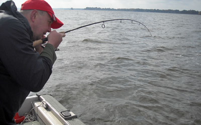 <p>Keith's got a good one! It's a hybrid striper caught on Lake Palestine, Tx</p>