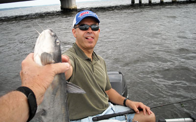 <p>Andy caught this blue using punch bait by the big bridge at Lake Palestine, Tx</p>